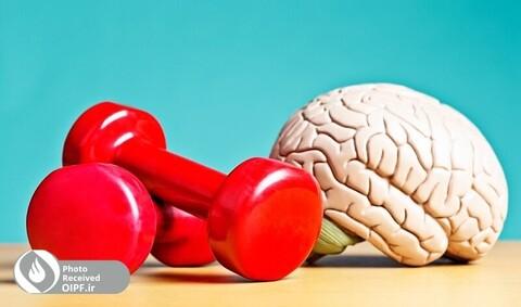فعالیت بدنی و تاثیر آن بر روی مغز