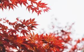 در آستانه پاییز، منابع غذایی غنی از ویتامین دی را فراموش نکنید