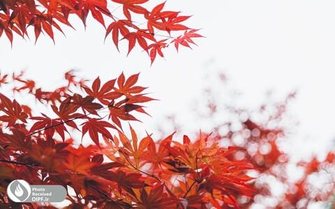 پاییز طبیعت