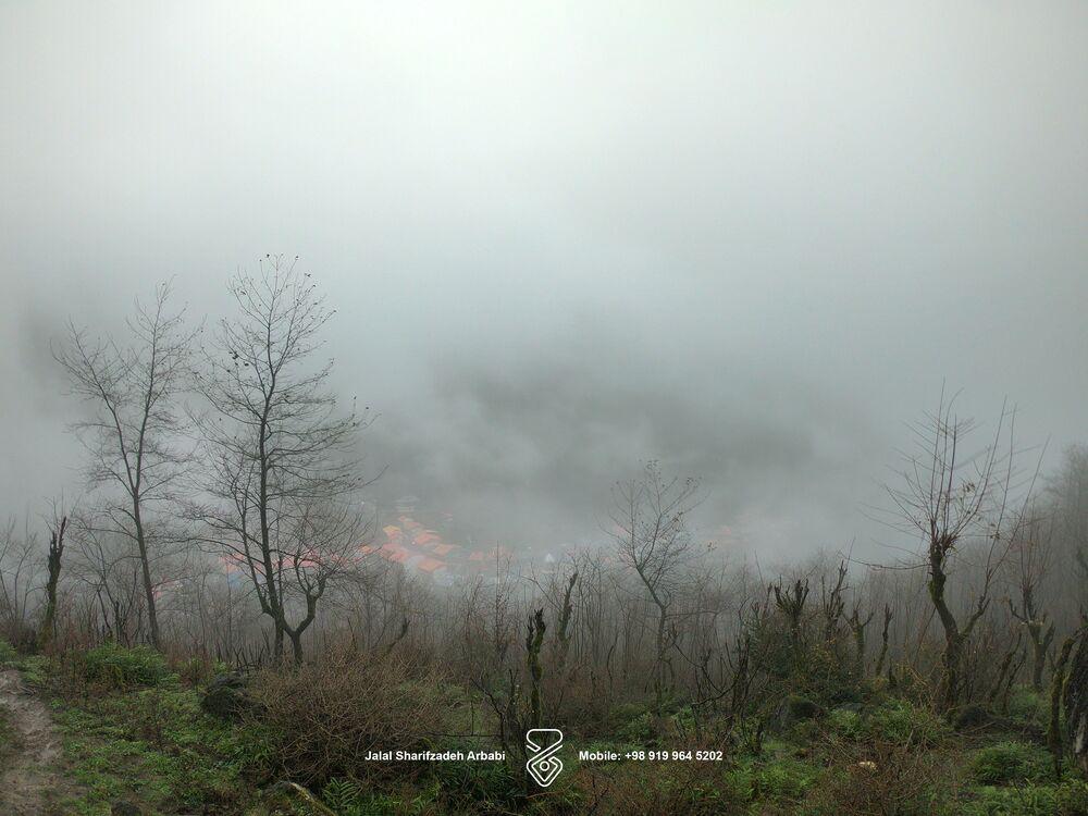 جنگلهای روستای امامزاده ابراهیم گیلان