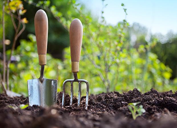 باغبانی روشی برای کاهش اضطراب در سالمندان و بازنشستگان