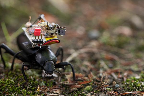 ساخت کوله پشتی دوربیندار برای سوسکها