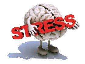 کلیپ/ آیا استرس می تواند باعث مرگ ما شود؟!