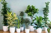 اصول صحیح نگهداری از گل و گیاه با نکاتی متفاوت