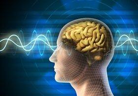 ۹ حقیقت جالب و مهم از تاثیر رفتار انسان بر مغز