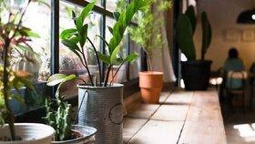 راز و رمز حفظ سلامت روان در فضای منزل