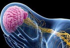 کشف نقاط کلیدی مغز برای تقویت صبوری