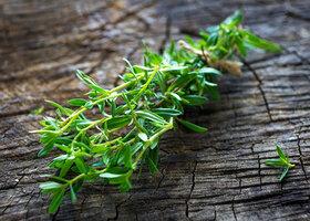 مرزه؛ یک ضد عفونی کننده قوی گیاهی