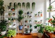 رابطه بین گل و گیاه و سلامت روانی افراد چیست؟