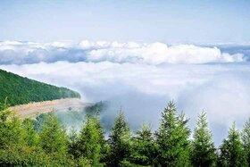 جنگل ابر، بر روی ابرها قدم بزنید!