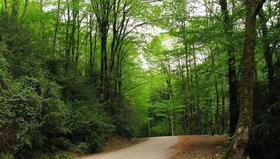 زیباترین پارکهای جنگلی ایران