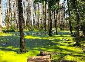 پارک جنگلی سراوان نگین زیبای گیلان